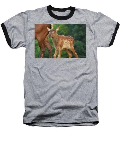Elk Calf Arrives Baseball T-Shirt by Alan Lenk