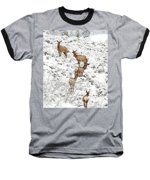 Elk Cows In Snow Baseball T-Shirt