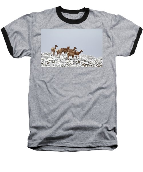 Elk Cows On The Alert In The Tetons Baseball T-Shirt