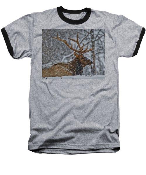 Elk Enjoying The Snow Baseball T-Shirt by Michael Peychich