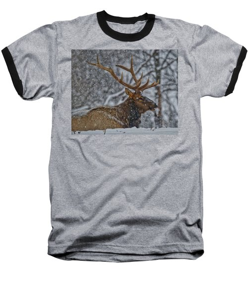 Elk Enjoying The Snow Baseball T-Shirt