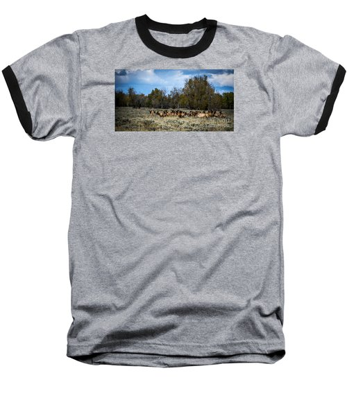 Baseball T-Shirt featuring the photograph Elk Family by Sandy Molinaro