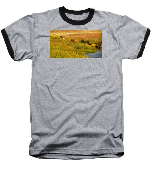 Elk In The Wild Flowers Baseball T-Shirt by Cathy Donohoue