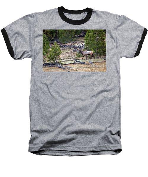 Elk In Yellowstone Baseball T-Shirt