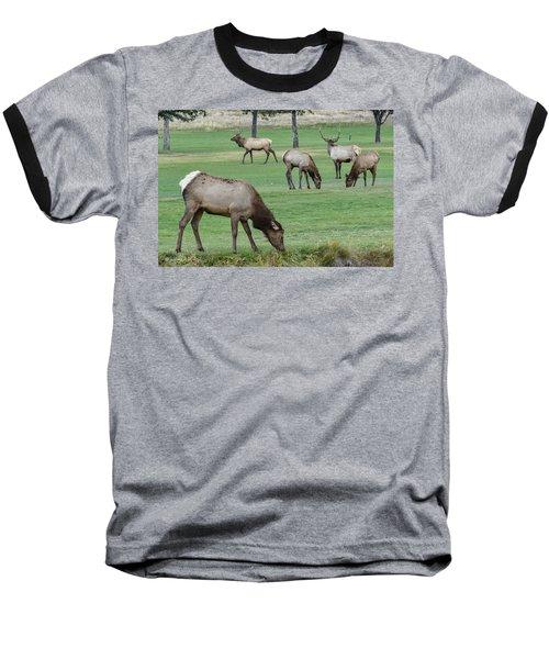 Elk On Golf Course Estes Park Colorado Baseball T-Shirt