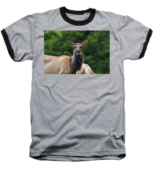 Elk Staring Closeup Portrait Baseball T-Shirt