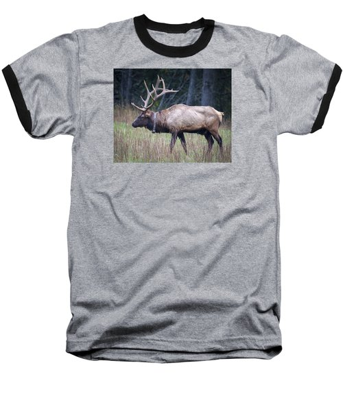 Elk Baseball T-Shirt by Tyson and Kathy Smith