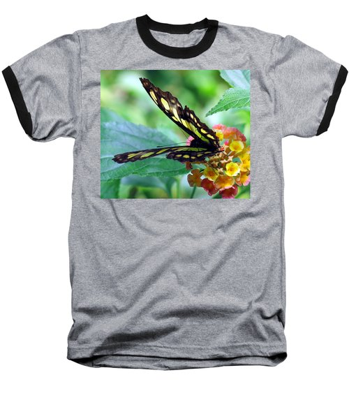 Elusive Butterfly Baseball T-Shirt by Betty Buller Whitehead
