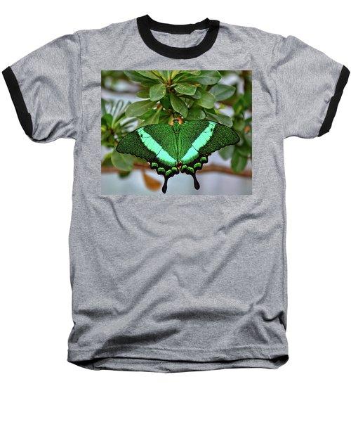 Emerald Swallowtail Butterfly Baseball T-Shirt