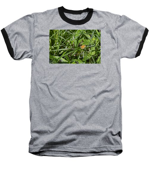 Baseball T-Shirt featuring the photograph Essex Skipper 2 by Leif Sohlman