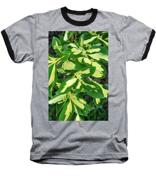 Euonymus Blondy Shrub 2 Baseball T-Shirt