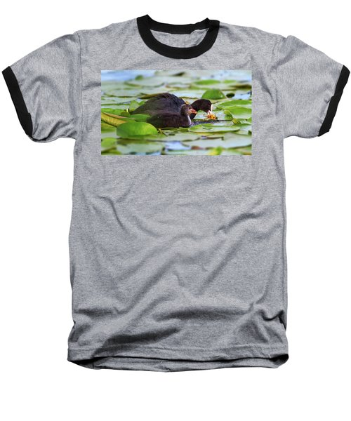 Eurasian Or Common Coot, Fulicula Atra, Duck And Duckling Baseball T-Shirt