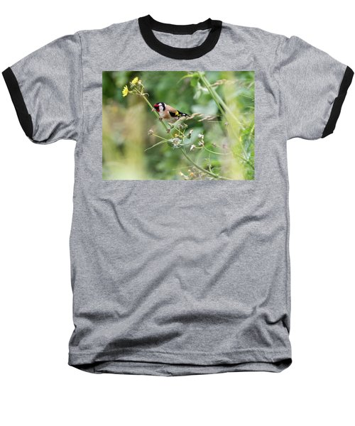 European Goldfinch Perched On Flower Stem B Baseball T-Shirt