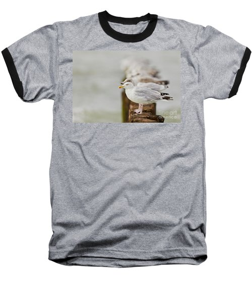 European Herring Gulls In A Row Fading In The Background Baseball T-Shirt