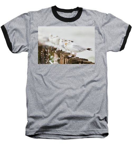 European Herring Gulls In A Row  Baseball T-Shirt