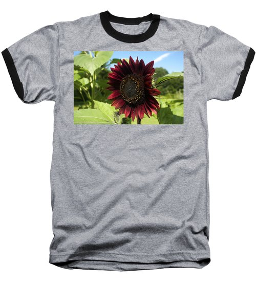 Evening Sun Sunflower #1 Baseball T-Shirt by Jeff Severson