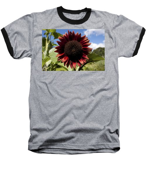 Evening Sun Sunflower #2 Baseball T-Shirt by Jeff Severson