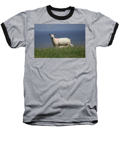 Ewe Guarding Lamb Baseball T-Shirt