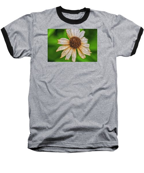 Faded Cone Flower Baseball T-Shirt by Tom Singleton