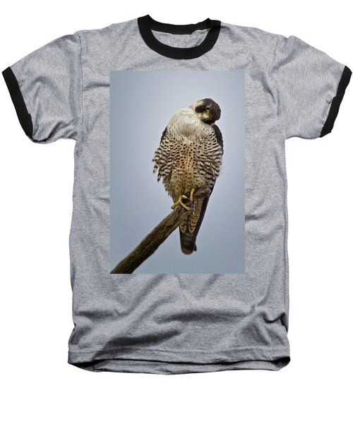 Falcon With Cocked Head Baseball T-Shirt