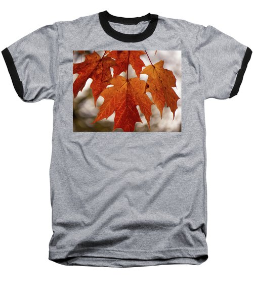 Fall Foliage Baseball T-Shirt by Kimberly Mackowski