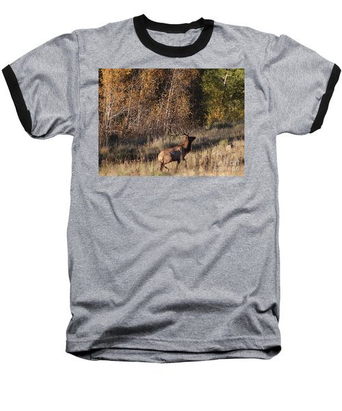 Fall Sunset Satellite Bull Elk II Baseball T-Shirt