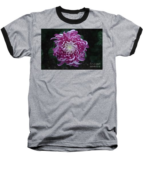 Fancy Chrysanthemum In Pink Baseball T-Shirt