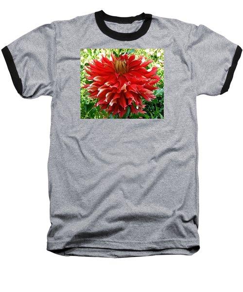 Fancy Red Dahlia Baseball T-Shirt