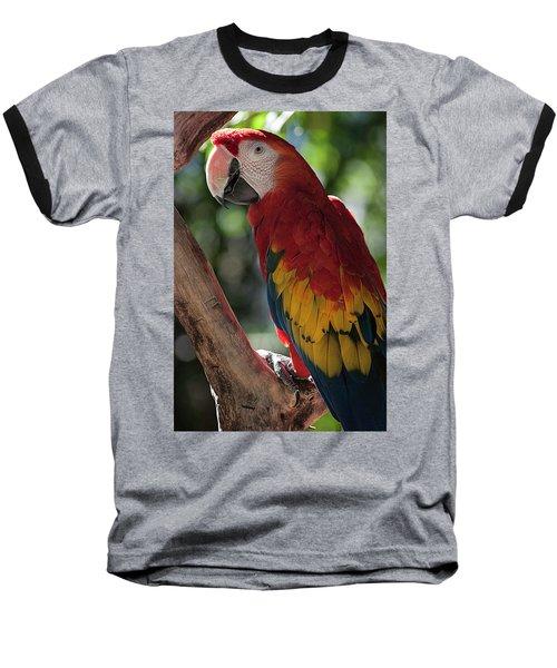 Feathered Rainbow Baseball T-Shirt