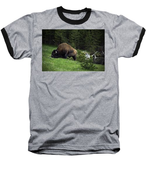 Baseball T-Shirt featuring the photograph Feeding Buffalo by Jason Moynihan