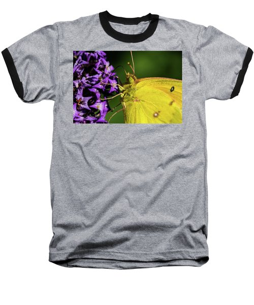 Baseball T-Shirt featuring the photograph Feeding Butterfly by Jay Stockhaus