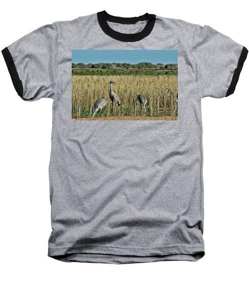 Feeding Greater Sandhill Cranes Baseball T-Shirt