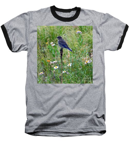 Female Bluebird Baseball T-Shirt