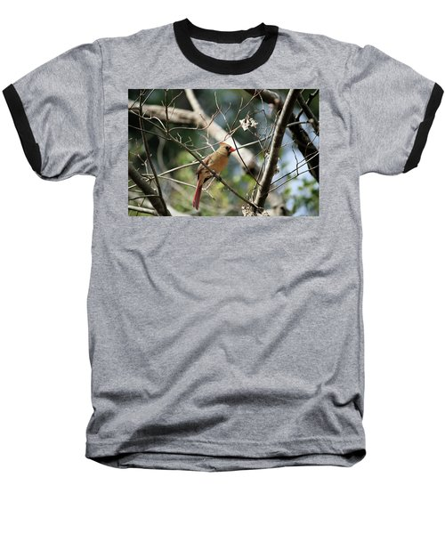 Baseball T-Shirt featuring the photograph Female Cardinal by Cathy Harper