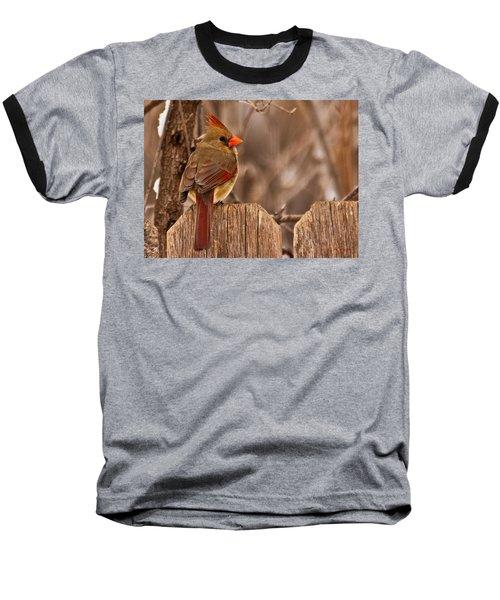Female Cardinal On The Fence Baseball T-Shirt