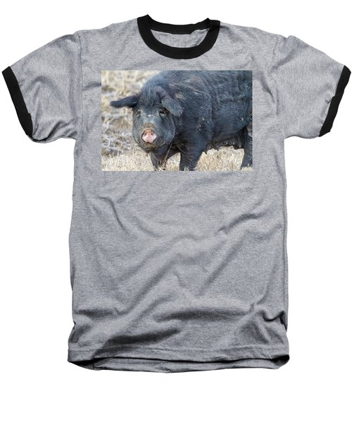 Baseball T-Shirt featuring the photograph Female Hog by James BO Insogna