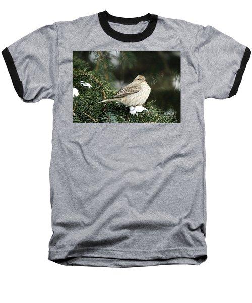 Female House Finch On Snow Baseball T-Shirt