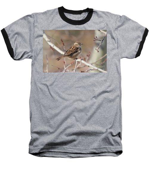 Female House Sparrow Baseball T-Shirt