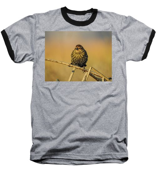 Female Red-winged Blackbird  Baseball T-Shirt