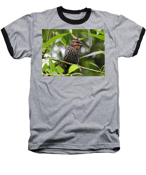 Female Redwinged Blackbird Baseball T-Shirt