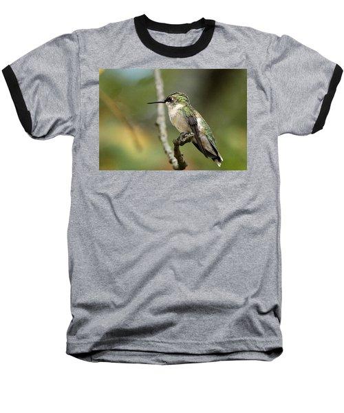 Female Ruby-throated Hummingbird On Branch Baseball T-Shirt by Sheila Brown