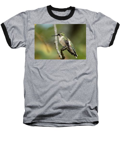 Female Ruby-throated Hummingbird On Branch Baseball T-Shirt