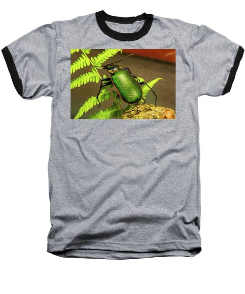 Fiery Hunter Carabid Baseball T-Shirt