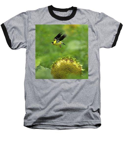 Finch Flight Baseball T-Shirt