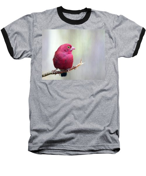 Fire Finch Baseball T-Shirt