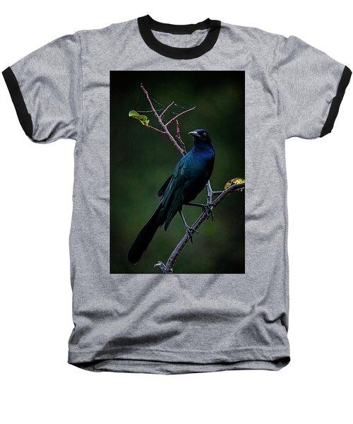 Male Boat-tailed Grackle Baseball T-Shirt by Cyndy Doty