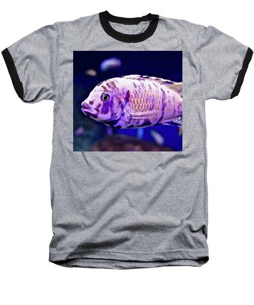 Calico Goldfish Baseball T-Shirt