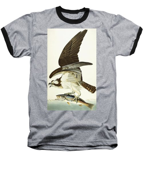 Fish Hawk Baseball T-Shirt by John James Audubon