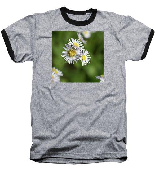 Fleabane, Erigeron Pulchellus - Baseball T-Shirt