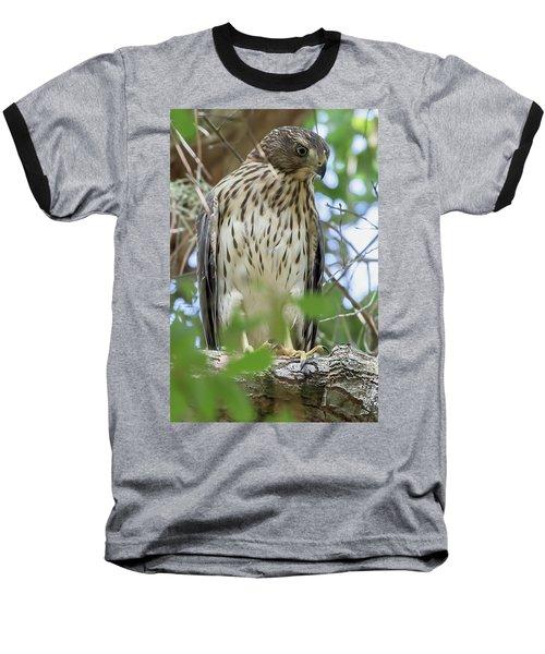 Fledgling Red-shouldered Hawk 2 Baseball T-Shirt